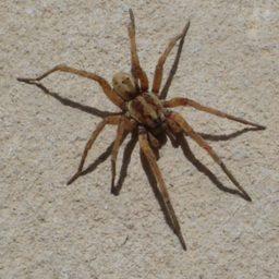 Уничтожение пауков в Гатчине